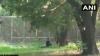 সিংহ বিক্রমে 'লায়ন কিং' এর খাঁচায় ঢুকে পড়লেন যুবক! এরপরের ঘটনার ভিডিও ভাইরাল