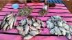 পশ্চিমবঙ্গ, দিল্লি, মণিপুরে বন্ধ হোক অবৈধ মাছ–মাংসের বাজার, দাবি পেটা ইন্ডিয়ার