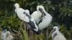 কুলিক নদীর পাড়ে সবুজ বন যেন রঙিন পাখিদের মুক্তাঙ্গন
