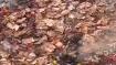 বিধানসভা ভোটের আগে ফের উদ্ধার কয়েকশ পোড়া নোট! বাড়ছে রহস্য