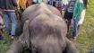 হাতির গায়ে জ্বলন্ত টায়ার ছুড়ে মেরে ফেলা হল, বীভৎস চিত্র তামিলনাড়ুর গ্রামে