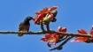 আঘাত হানতে চলেছে একের পর এক পশ্চিমী ঝঞ্ঝা!  উত্তর ও দক্ষিণবঙ্গের আবহাওয়ার রিপোর্ট একনজরে