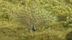 অরন্যরানী গরুমারা সুন্দরী ডুয়ার্সের প্রাণ, উইকেন্ড প্ল্যান বানিয়ে ফেলুন