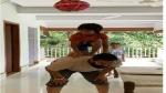 জন্মাষ্টমীতে আমিরপুত্রের 'দহি-হান্ডি' উদযাপনের দৃশ্য ভাইরাল! উৎসবে মাতোয়ারা গোটা দেশ