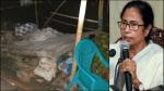 কচুয়া কাণ্ডে ক্ষতিপূরণ ঘোষণা মুখ্যমন্ত্রী মমতা, আহতদের দেখতে গেলেন হাসপাতালে