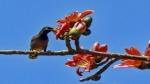 অপেক্ষা করছে উষ্ণতম মার্চ, বইতে পারে লু, ৪৮ ঘণ্টা পর ফের বাড়বে রাজ্যের তাপমাত্রা
