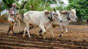 'গাঁও, গরিব অউর কিষাণ' গ্রামাঞ্চলের মন জয়ে বাজেটে নয়া প্রকল্প মোদী সরকারের