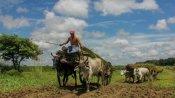 জমির জন্য আধিকারিকের পায়ে পড়লেন তেলাঙ্গানার বৃদ্ধ কৃষক, ভাইরাল হল ভিডিও