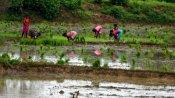 সাতমাসে বাংলা শস্য বিমা প্রকল্পে ৪৬ লক্ষ কৃষককে অন্তর্ভুক্ত করেছে রাজ্য সরকার