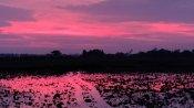 বিধ্বংসী আম্ফানের তান্ডব থামতেই গোলাপী রঙে সেজে উঠল ভুবনেশ্বরের আকাশ