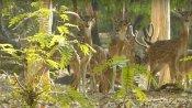 গুরুদেবের শান্তির নীড়ে এক টুকরো বন্যপ্রাণের চারণভূমিতে লুকিয়ে অপরিসীম পরিতৃপ্তি