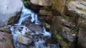 মেঘের রাজ্যে মাথা তুলে দাঁড়িয়ে সিঙ্গালীলা জাতীয় উদ্যান, বন্ধু যেখানে রডোডেনড্রন
