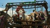 কয়লা আর গরু পাচার কাণ্ডে এবার বড়সড় পদক্ষেপের পথে সিবিআই