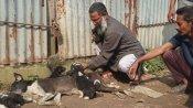 অজ্ঞাত কারণে ধূপগুড়িতে মৃত্যু শতাধিক কুকুরের, চাঞ্চল্য এলাকায়