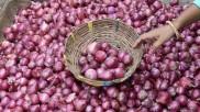 কলকাতার পাইকারি বাজারে দাম কমলো পেঁয়াজের
