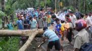 কলকাতা যেন বিরল বৃক্ষের মৃত্যু উপত্যকা! বিশেষজ্ঞদের কাঠগড়ায় নগর পরিকল্পনা