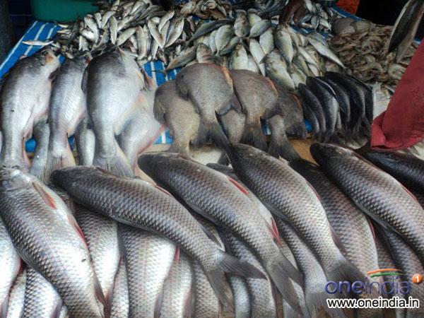 দুবাই, জাপান, চিনের প্রবাসী বাঙালিরা সেদেশে বসেই পাবেন বাংলার মাছ!