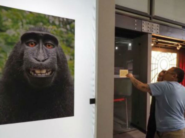 Monkey Loses Selfie Copyright Case Here Is The Details