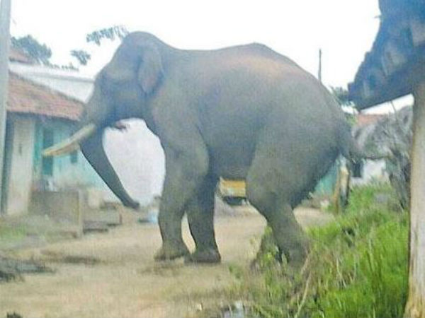 10000 Cases Conflicts Between Humans Elephants Have Been Reported Meghalaya Past Five Years