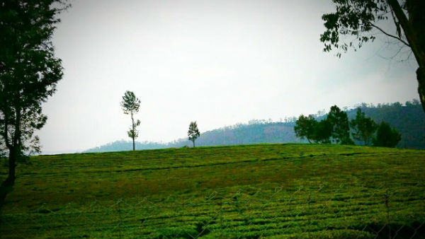 Kerala Tourisim Know The Best Places To Visit In Monsoon
