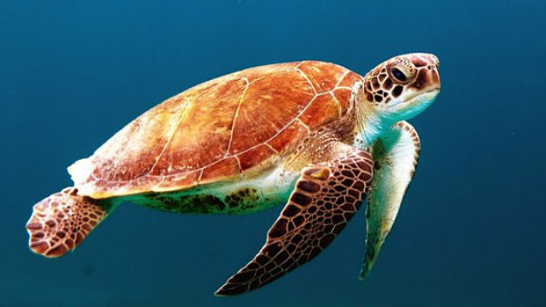 Turtles Will Make You Rich Know The Fengshui Techniques