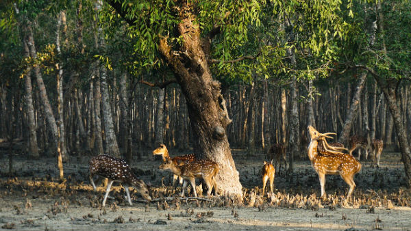 Sundarban Is The Major Attraction Of East And West Bengal