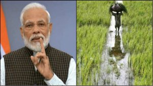 Modi Cabinet Increases Msp For Kharif Crops Know How It Gives Relief For Farmers
