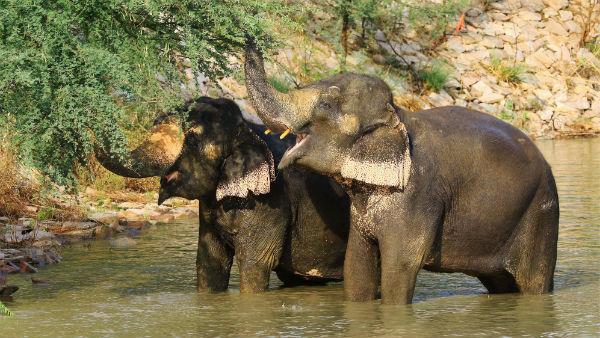 কেরলে হাতি মৃত্যুর ময়নাতদন্তের রিপোর্ট জমা পড়ল রাজ ভবনে, মুখের আঘাত নিয়ে তদন্ত এখনও বাকি