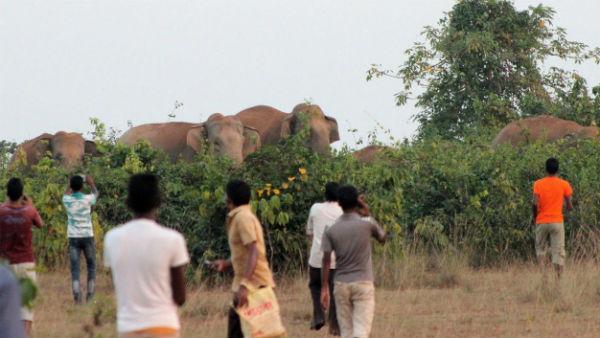 পুজো শেষে হাতির পাল আতঙ্ক ছড়াল পশ্চিম মেদিনীপুরে