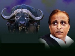 Policemen Suspended For Delay In Finding Ministers Buffaloes