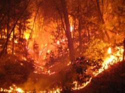 Forest Dept Stil Fighting To Douse Wild Fire In Sundarbans