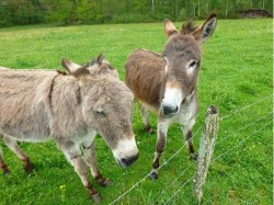 Poland Two Seperated Amorous Donkeys Reunited In Zoo After Massive Outrage