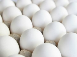 State To Observe World Egg Day To Increase Production Of Eggs