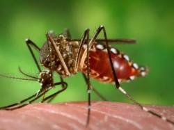 Dengue Scare In Siliguri Locality