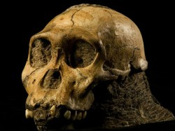 Year Old Skull Seems To Show Victim Was Bludgeoned To Death