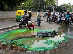 Bengaluru Commuters Shocked To Find Crocodile On The Road