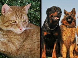 Spanish Town Grants Cats Dogs Equal Rights As Humans