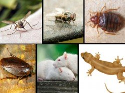 Quick Remedies To Get Rid Of These Six Pests