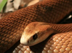 Jealous Husband Sends Wife S Colleague Live Snake Warns To Stay Away