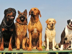 Dogs Do Yoga Create Doga World Record Hong Kong