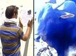A Report Is Filed Of A Missing Bull In Varanasi