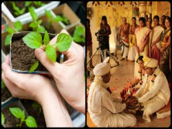 Bride Wants In Laws To Plant 10000 Saplings As Wedding Gift