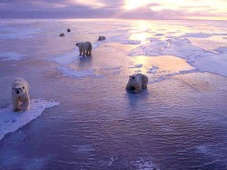 After 1 Lakh Years Arctic May Turn Ice Free Again Study