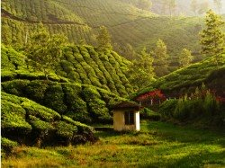 Mesmerising Munnar Photo Tour Best Photos