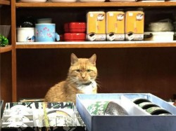 Cat Runs Store 9 Years Without Taking A Day Off