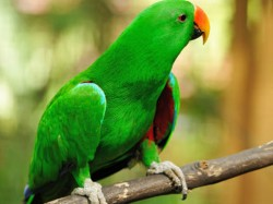 Family Parrot Exposes Cheating Husband S Affair Wife Kuwait