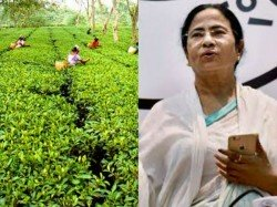 Can Mamata Banerjee Refuse The Present Situation Tea Garden Labours