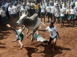 At Least Two People Died Many Others Injured During Jallikattu