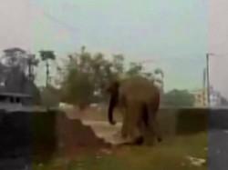 Dalama Striked At The Wedding House Alipurduar Elephant Broke
