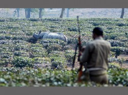 Corbett Gets Nod Kill Poachers